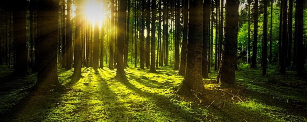 Wald als Geldanlage: Nachhaltig oder (zu) riskant ?