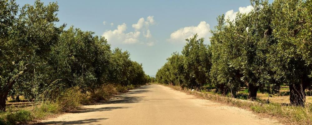 Olive Tree Farmers GmbH, Olive Tree Invest S.L.; Thomas Lommel: Schlechte Angebote